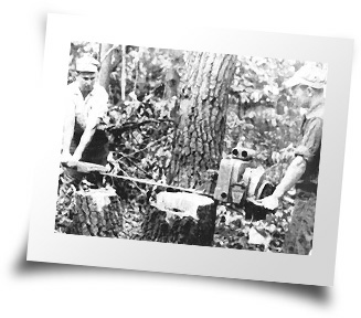 Older photo of tree harvesting