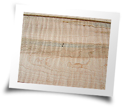 Curly Ambrosia Maple - Image 2